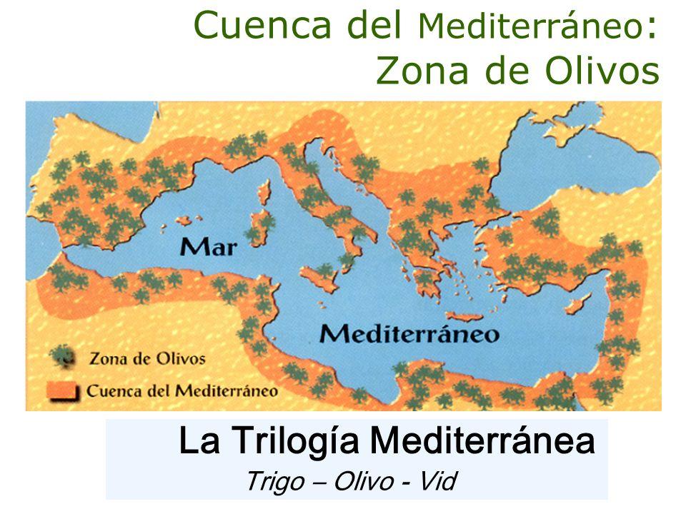 Cuenca del Mediterráneo : Zona de Olivos Trigo – Olivo - Vid La Trilogía Mediterránea