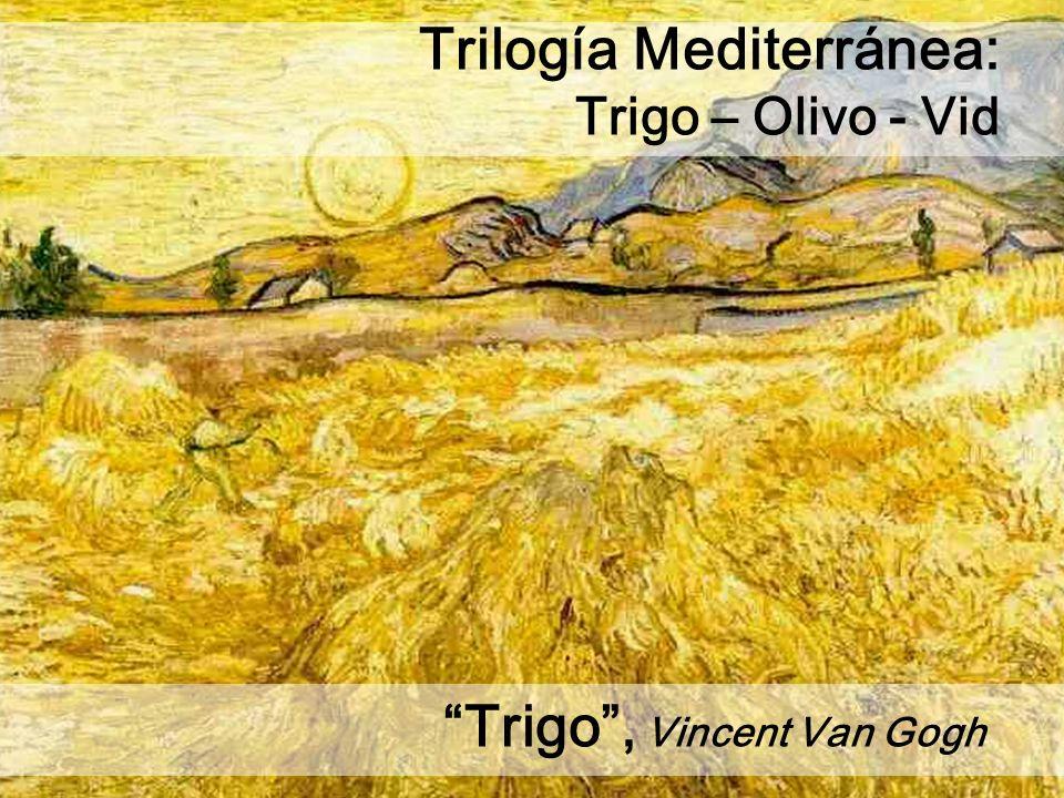 Trigo, Vincent Van Gogh Trilogía Mediterránea: Trigo – Olivo - Vid