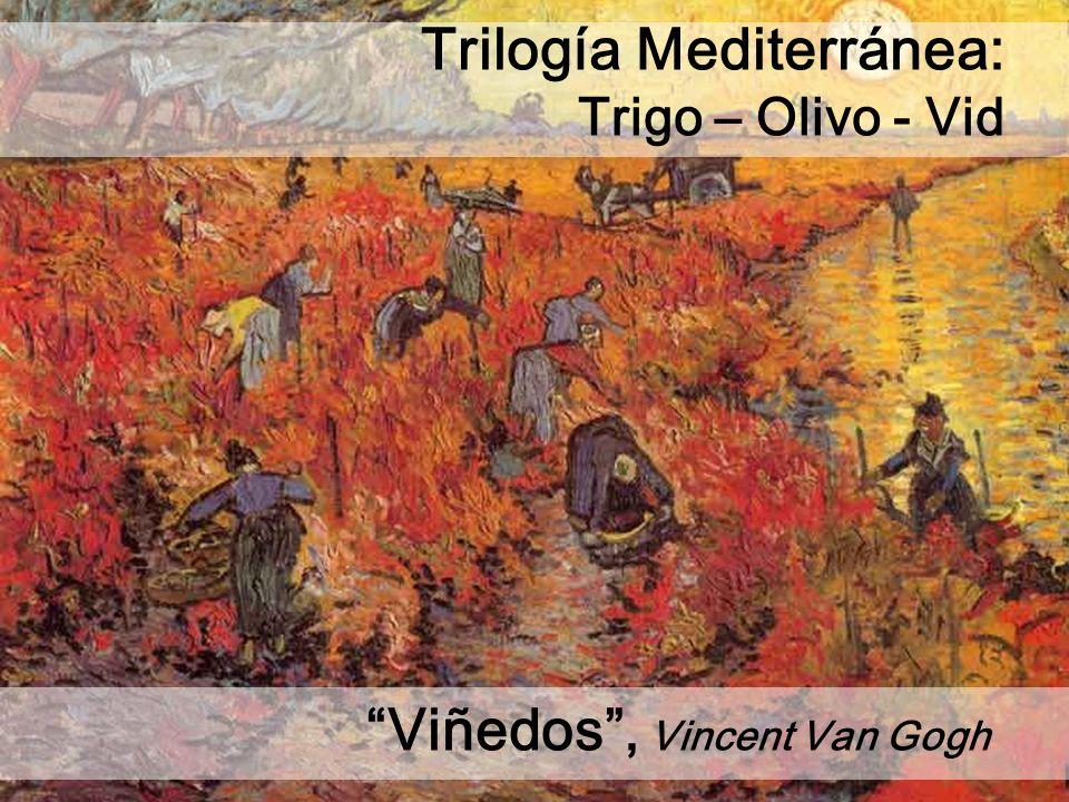Viñedos, Vincent Van Gogh Trilogía Mediterránea: Trigo – Olivo - Vid