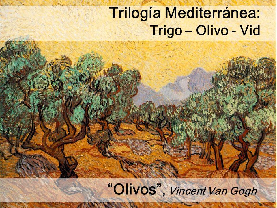 Olivos, Vincent Van Gogh Trilogía Mediterránea: Trigo – Olivo - Vid
