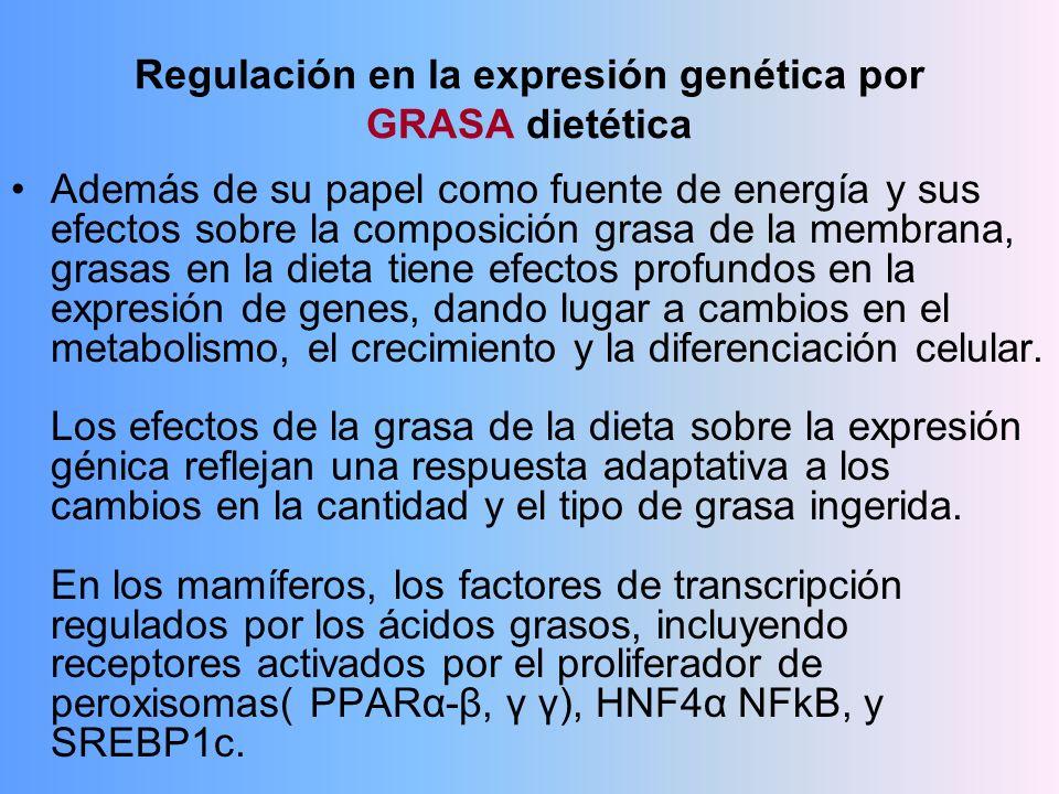 Regulación en la expresión genética por GRASA dietética Además de su papel como fuente de energía y sus efectos sobre la composición grasa de la membr