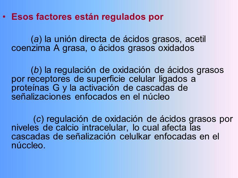 Esos factores están regulados por (a) la unión directa de ácidos grasos, acetil coenzima A grasa, o ácidos grasos oxidados (b) la regulación de oxidac