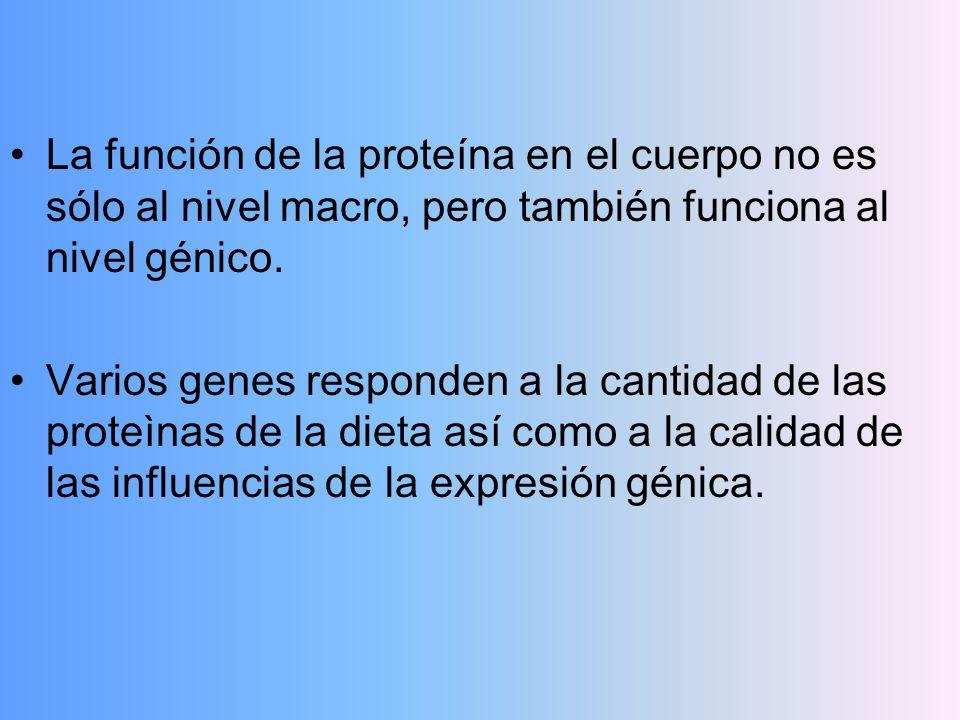 La función de la proteína en el cuerpo no es sólo al nivel macro, pero también funciona al nivel génico. Varios genes responden a la cantidad de las p