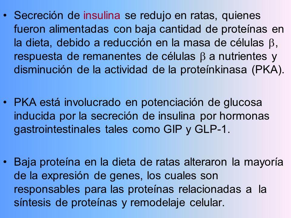 Secreción de insulina se redujo en ratas, quienes fueron alimentadas con baja cantidad de proteínas en la dieta, debido a reducción en la masa de célu