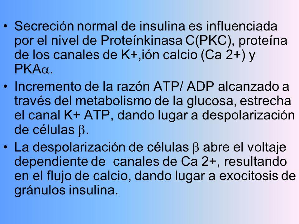 Secreción normal de insulina es influenciada por el nivel de Proteínkinasa C(PKC), proteína de los canales de K+,ión calcio (Ca 2+) y PKA. Incremento