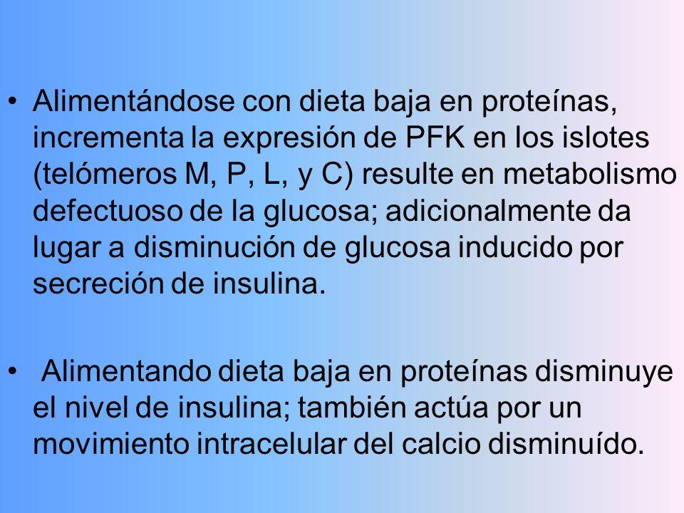 Alimentándose con dieta baja en proteínas, incrementa la expresión de PFK en los islotes (telómeros M, P, L, y C) resulte en metabolismo defectuoso de