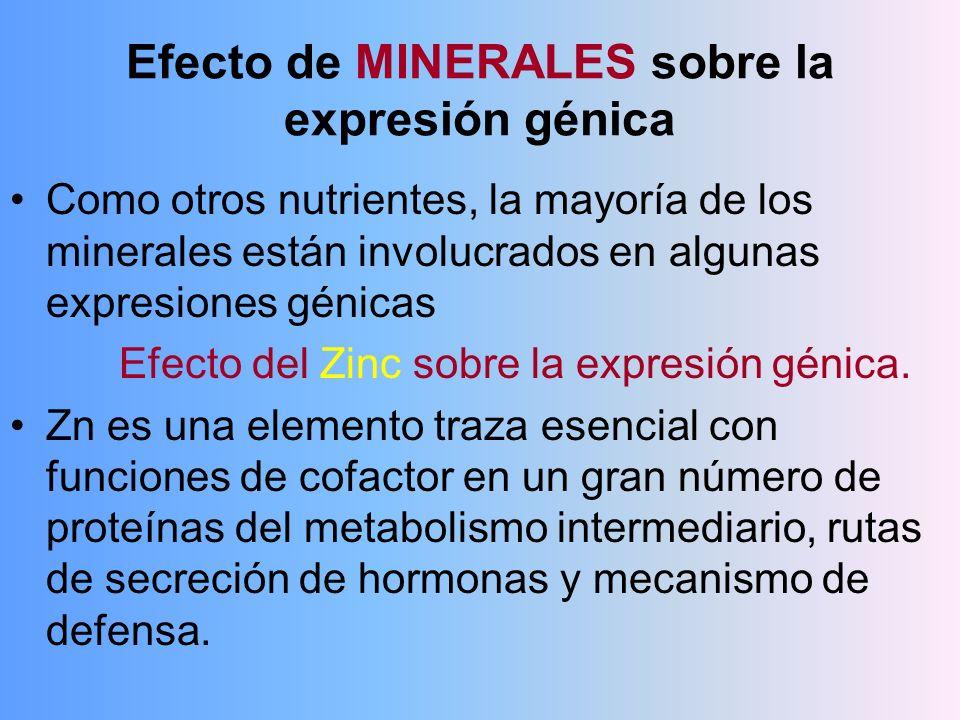 Efecto de MINERALES sobre la expresión génica Como otros nutrientes, la mayoría de los minerales están involucrados en algunas expresiones génicas Efe