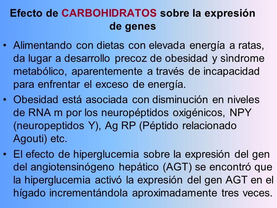 Efecto de CARBOHIDRATOS sobre la expresión de genes Alimentando con dietas con elevada energía a ratas, da lugar a desarrollo precoz de obesidad y sìn