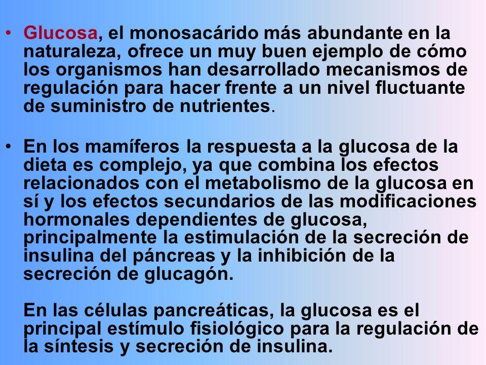 Glucosa, el monosacárido más abundante en la naturaleza, ofrece un muy buen ejemplo de cómo los organismos han desarrollado mecanismos de regulación p