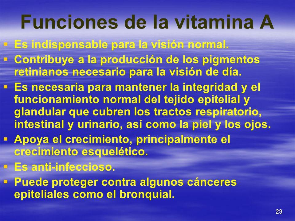23 Funciones de la vitamina A Es indispensable para la visión normal. Contribuye a la producción de los pigmentos retinianos necesario para la visión