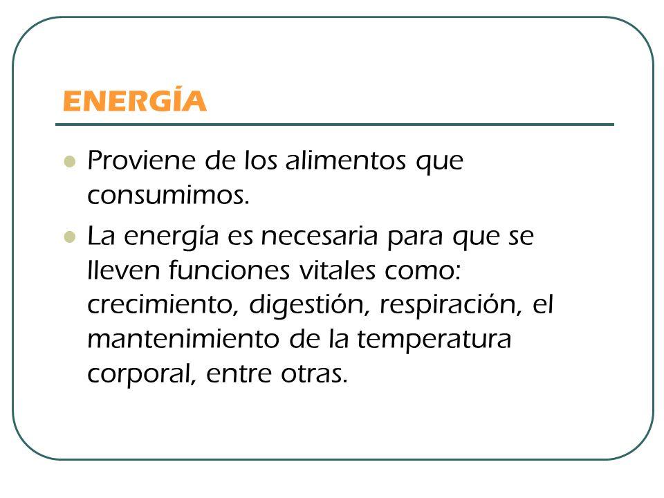 ENERGÍA Proviene de los alimentos que consumimos. La energía es necesaria para que se lleven funciones vitales como: crecimiento, digestión, respiraci