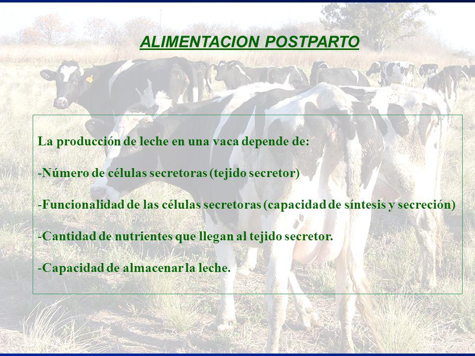 La producción de leche en una vaca depende de: -Número de células secretoras (tejido secretor) -Funcionalidad de las células secretoras (capacidad de