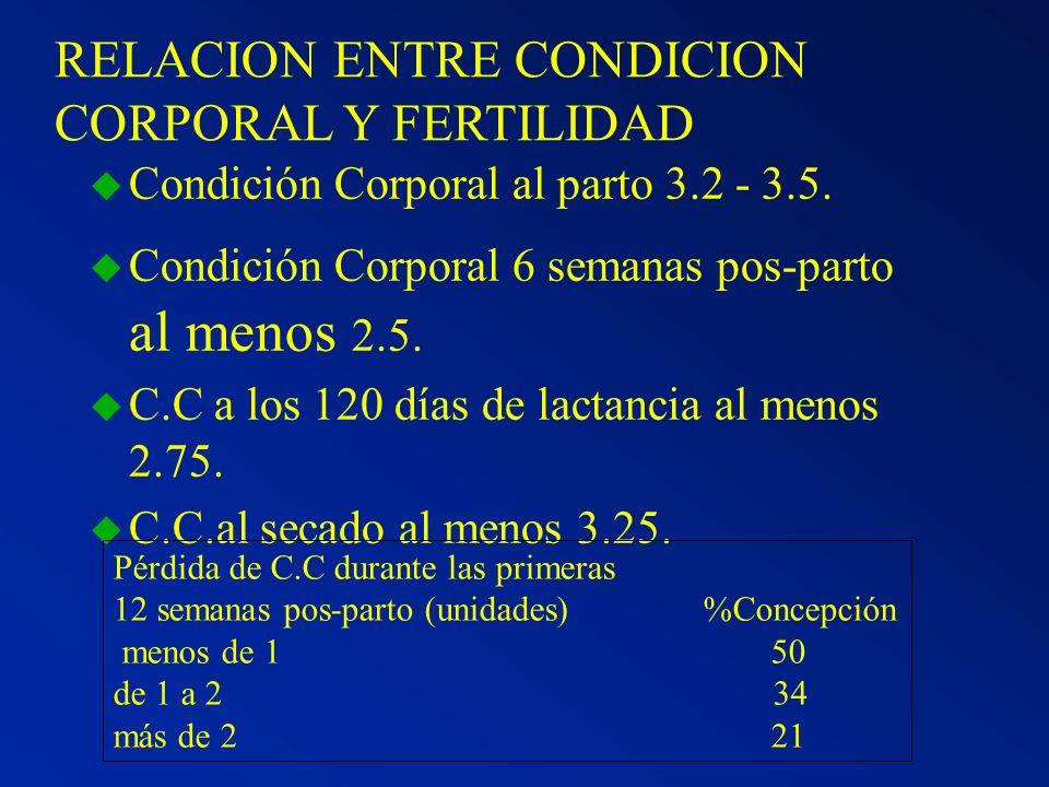 RELACION ENTRE CONDICION CORPORAL Y FERTILIDAD u Condición Corporal al parto 3.2 - 3.5. u Condición Corporal 6 semanas pos-parto al menos 2.5. u C.C a