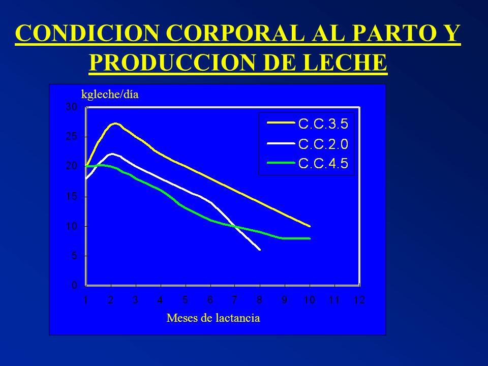 CONDICION CORPORAL AL PARTO Y PRODUCCION DE LECHE kgleche/día Meses de lactancia