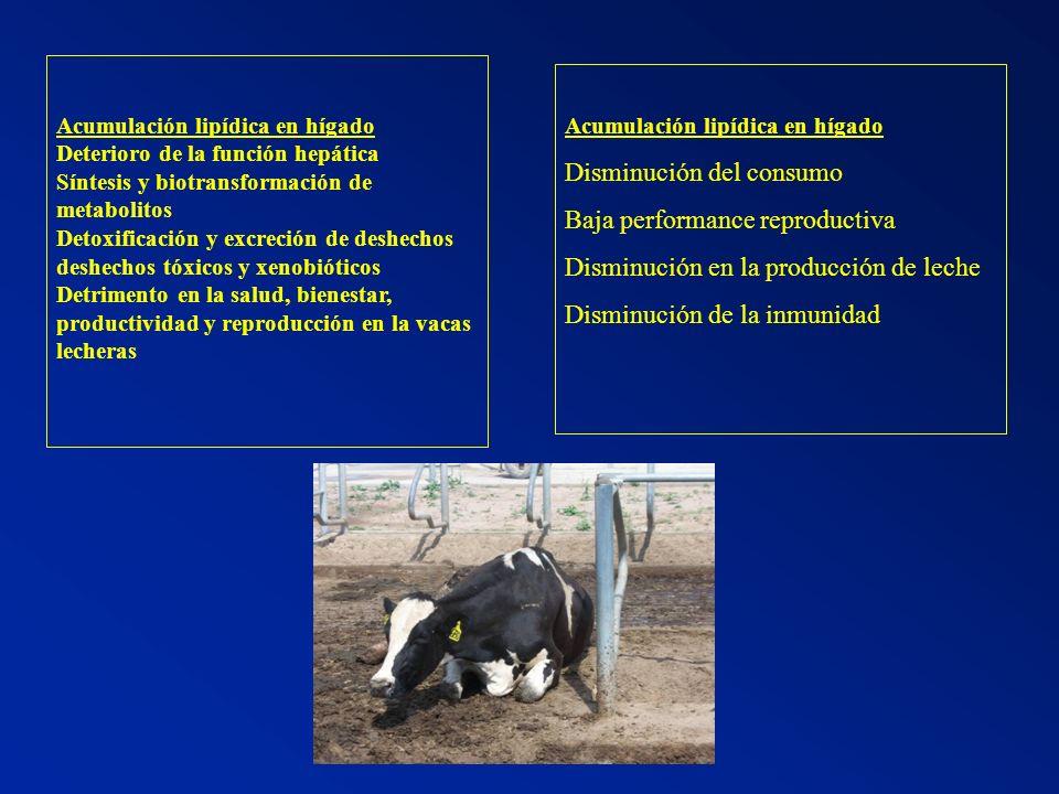 EFECTO DE DIETAS CON DEFECTO ENERGETICO Defecto energético Proteína bacteriana (P.B) Defecto de P.B.
