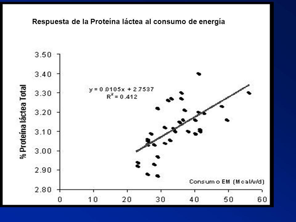 Respuesta de la Proteína láctea al consumo de energía