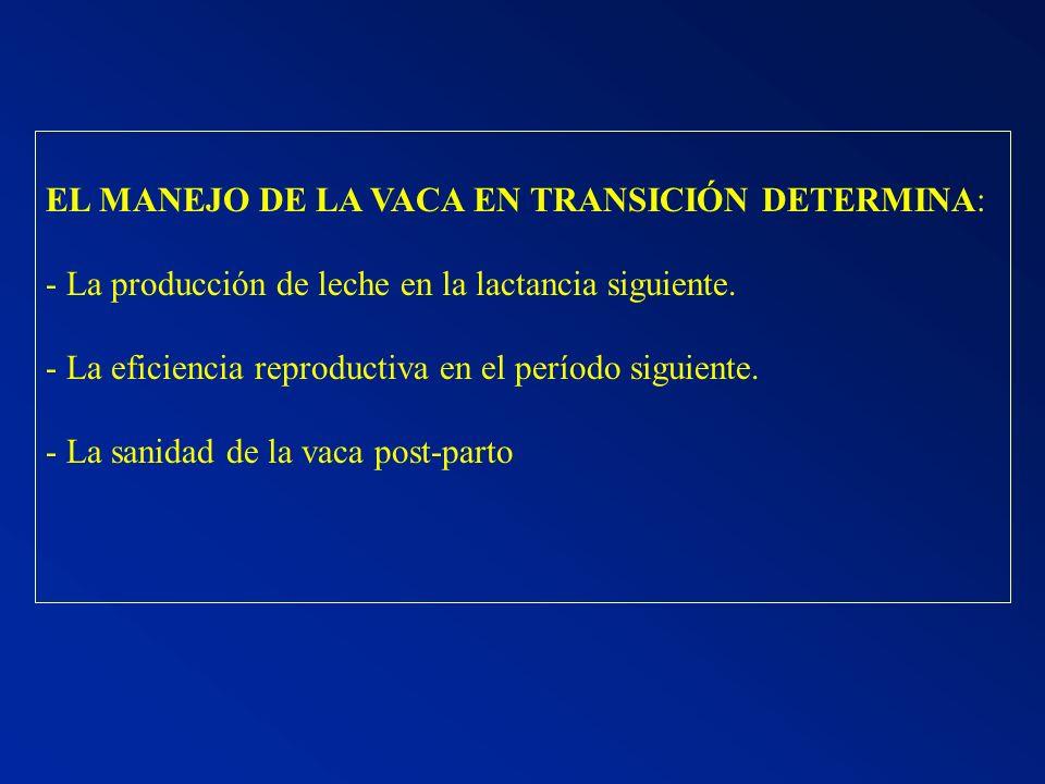 EL MANEJO DE LA VACA EN TRANSICIÓN DETERMINA: - La producción de leche en la lactancia siguiente. - La eficiencia reproductiva en el período siguiente