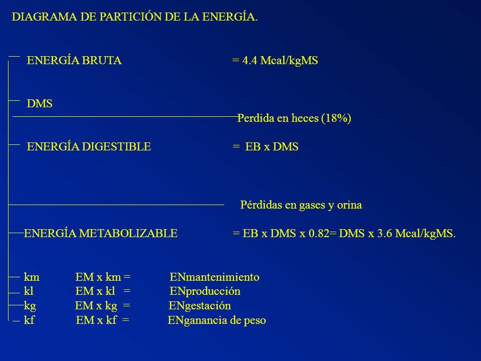 DIAGRAMA DE PARTICIÓN DE LA ENERGÍA. ENERGÍA BRUTA = 4.4 Mcal/kgMS DMS Perdida en heces (18%) ENERGÍA DIGESTIBLE = EB x DMS Pérdidas en gases y orina