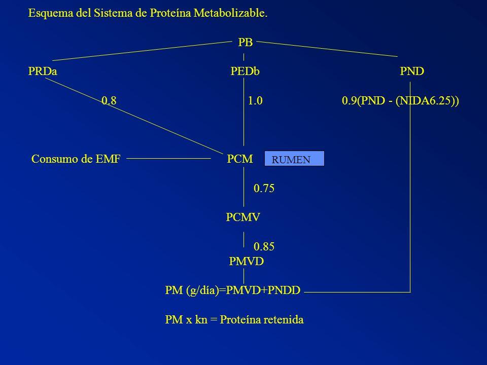 Esquema del Sistema de Proteína Metabolizable. PB PRDa PEDb PND 0.8 1.0 0.9(PND - (NIDA6.25)) Consumo de EMF PCM 0.75 PCMV 0.85 PMVD PM (g/día)=PMVD+P