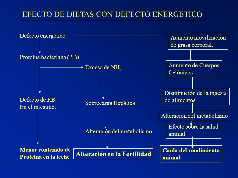 EFECTO DE DIETAS CON DEFECTO ENERGETICO Defecto energético Proteína bacteriana (P.B) Defecto de P.B. En el intestino. Menor contenido de Proteína en l