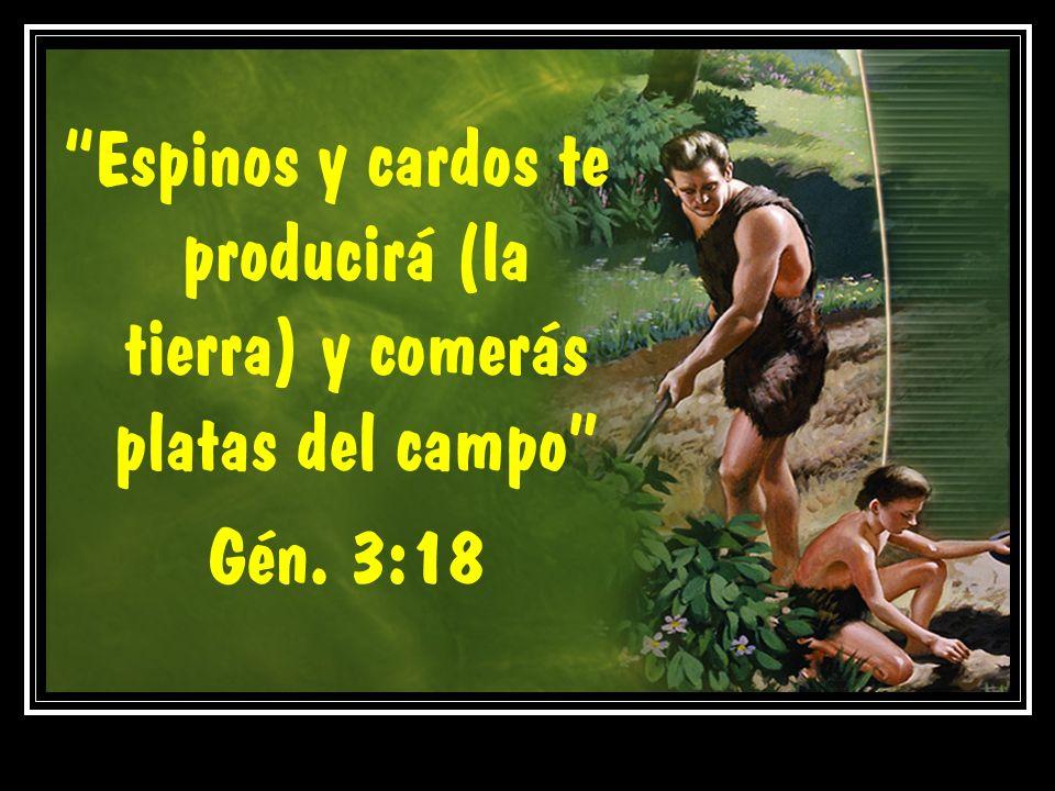 Espinos y cardos te producirá (la tierra) y comerás platas del campo Gén. 3:18
