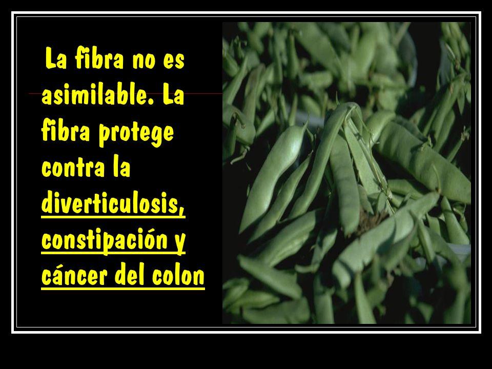 La fibra no es asimilable. La fibra protege contra la diverticulosis, constipación y cáncer del colon