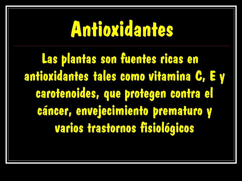 Antioxidantes Las plantas son fuentes ricas en antioxidantes tales como vitamina C, E y carotenoides, que protegen contra el cáncer, envejecimiento pr