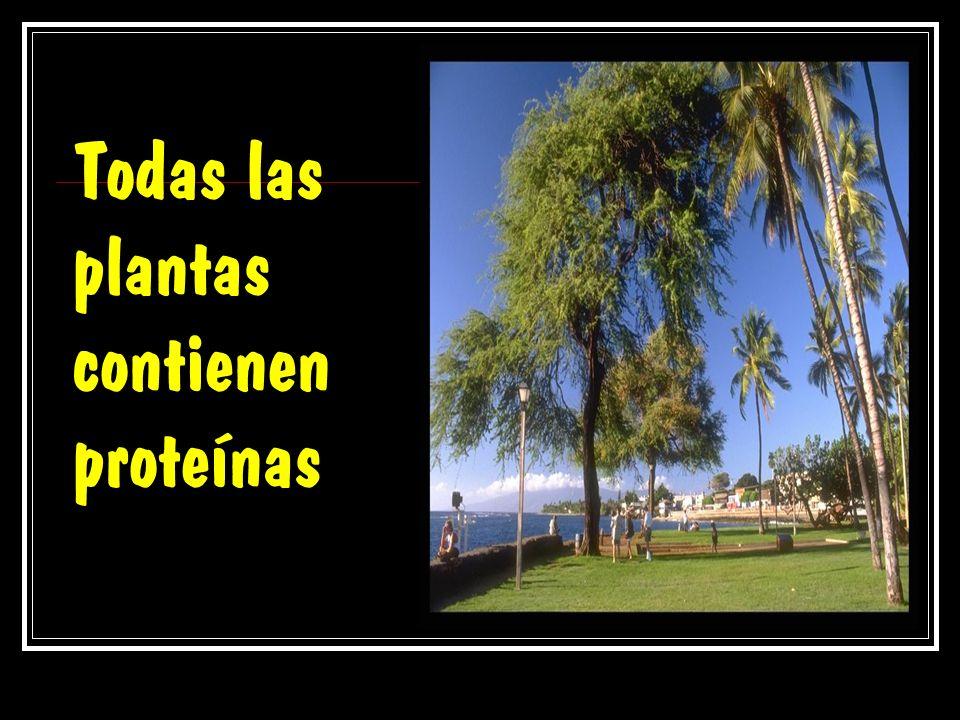 Todas las plantas contienen proteínas