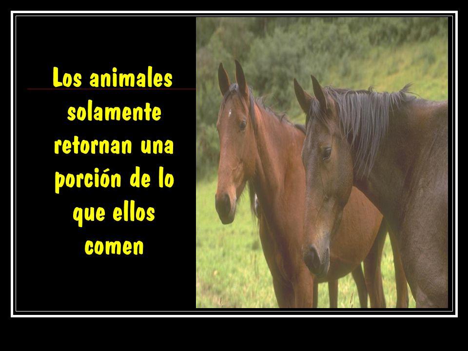 Los animales solamente retornan una porción de lo que ellos comen