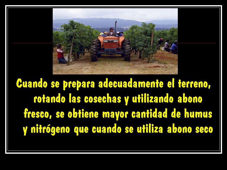 Cuando se prepara adecuadamente el terreno, rotando las cosechas y utilizando abono fresco, se obtiene mayor cantidad de humus y nitrógeno que cuando