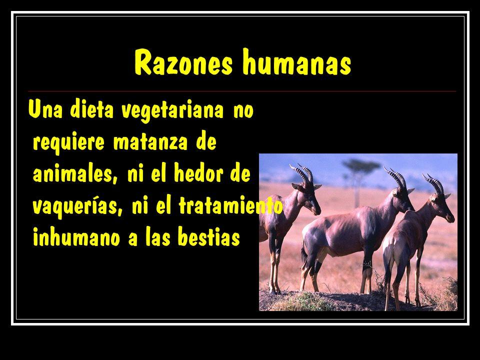 Razones humanas Una dieta vegetariana no requiere matanza de animales, ni el hedor de vaquerías, ni el tratamiento inhumano a las bestias