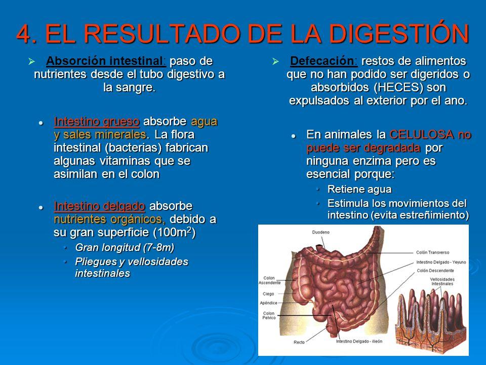 4. EL RESULTADO DE LA DIGESTIÓN paso de nutrientes desde el tubo digestivo a la sangre. Absorción intestinal: paso de nutrientes desde el tubo digesti