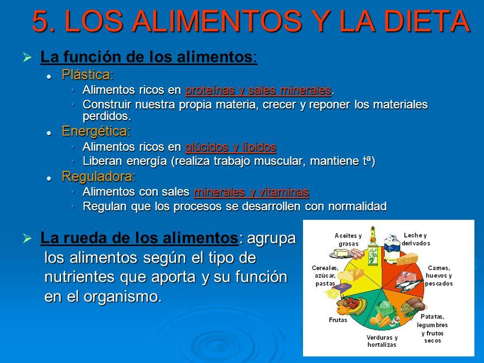 5. LOS ALIMENTOS Y LA DIETA La función de los alimentos: Plástica: Plástica: Alimentos ricos en proteínas y sales minerales.Alimentos ricos en proteín