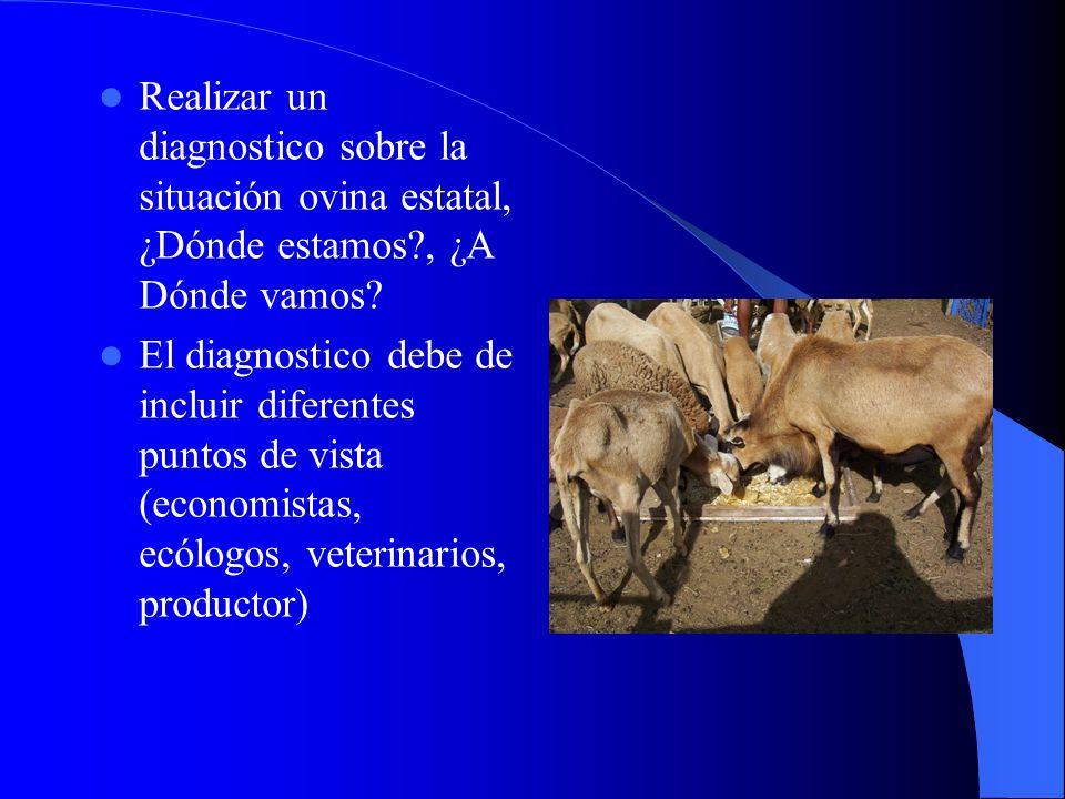 Realizar un diagnostico sobre la situación ovina estatal, ¿Dónde estamos , ¿A Dónde vamos.