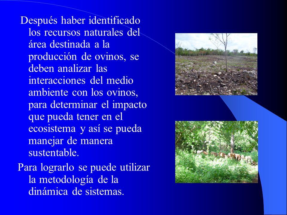 Después haber identificado los recursos naturales del área destinada a la producción de ovinos, se deben analizar las interacciones del medio ambiente con los ovinos, para determinar el impacto que pueda tener en el ecosistema y así se pueda manejar de manera sustentable.