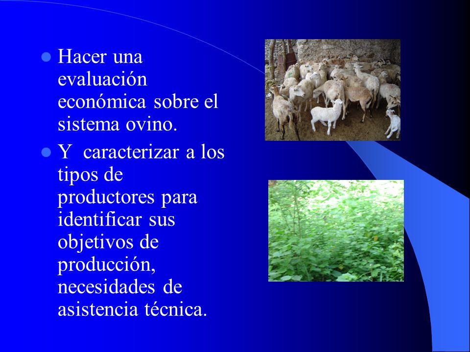 Hacer una evaluación económica sobre el sistema ovino.
