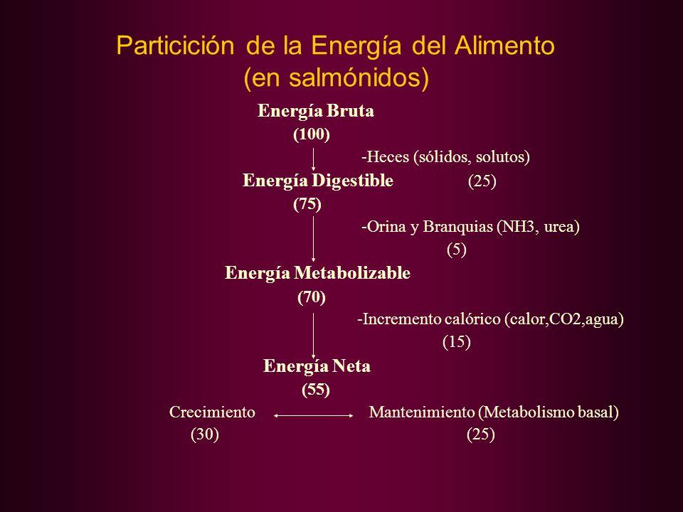 Particición de la Energía del Alimento (en salmónidos) Energía Bruta (100) -Heces (sólidos, solutos) Energía Digestible (25) (75) -Orina y Branquias (