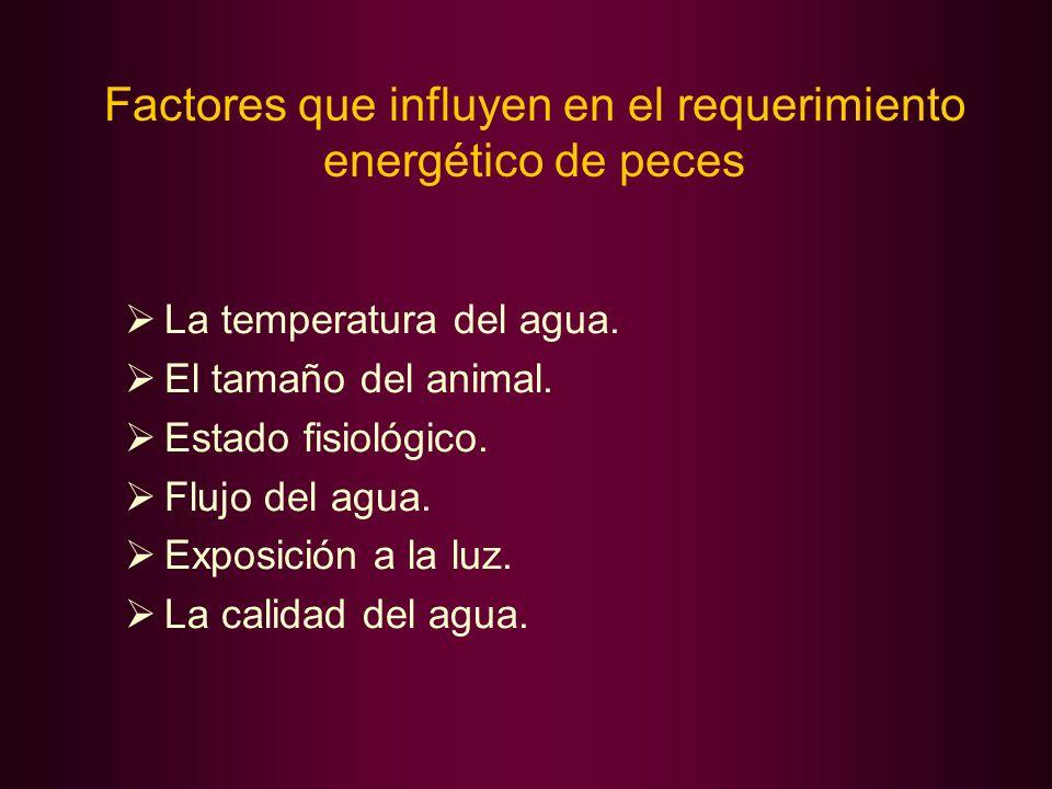 Factores que influyen en el requerimiento energético de peces La temperatura del agua. El tamaño del animal. Estado fisiológico. Flujo del agua. Expos