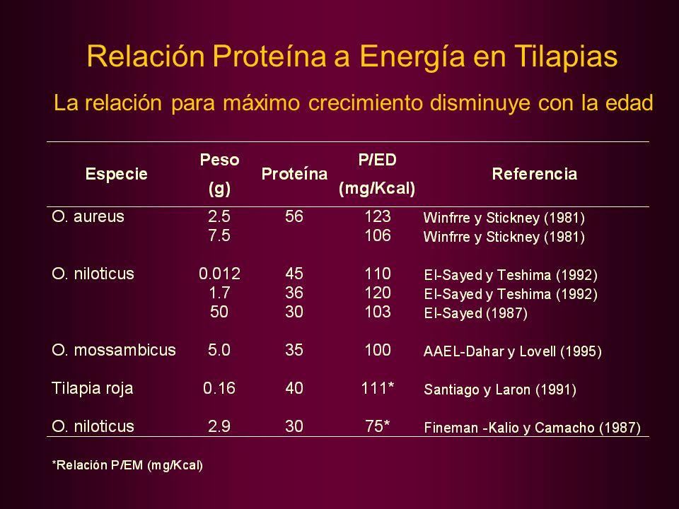 Relación Proteína a Energía en Tilapias La relación para máximo crecimiento disminuye con la edad