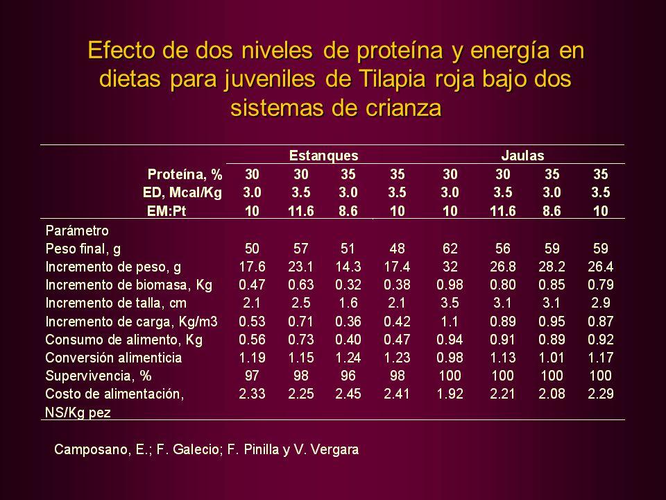 Efecto de dos niveles de proteína y energía en dietas para juveniles de Tilapia roja bajo dos sistemas de crianza