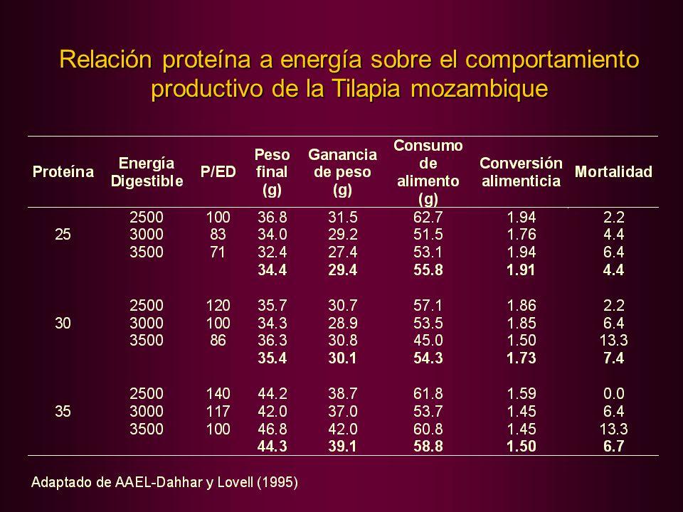 Relación proteína a energía sobre el comportamiento productivo de la Tilapia mozambique