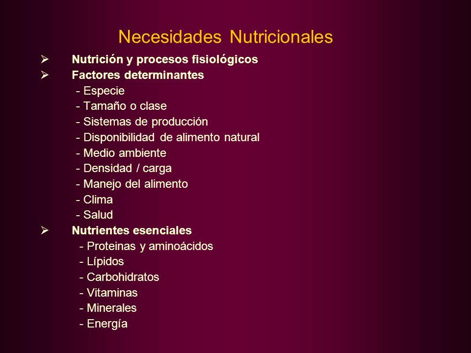 Necesidades Nutricionales Nutrición y procesos fisiológicos Factores determinantes - Especie - Tamaño o clase - Sistemas de producción - Disponibilida