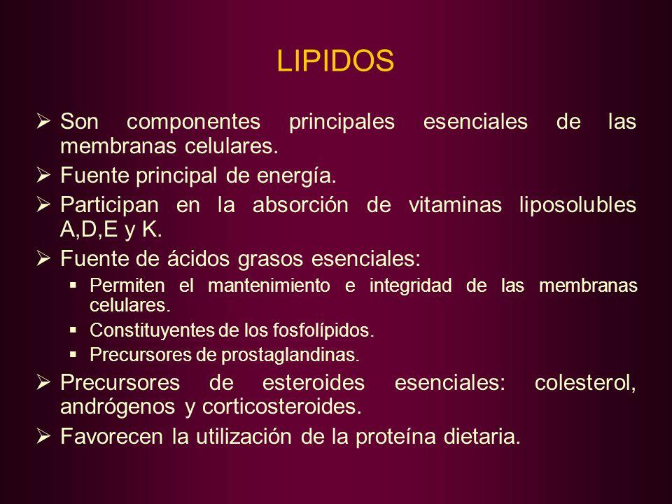 LIPIDOS Son componentes principales esenciales de las membranas celulares. Fuente principal de energía. Participan en la absorción de vitaminas liposo