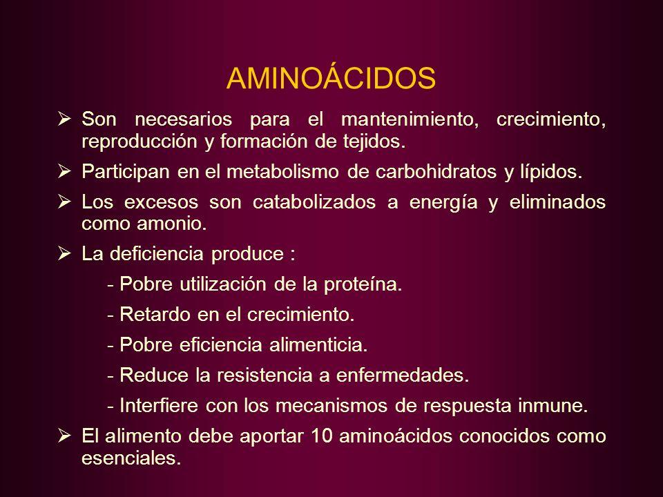 AMINOÁCIDOS Son necesarios para el mantenimiento, crecimiento, reproducción y formación de tejidos. Participan en el metabolismo de carbohidratos y lí