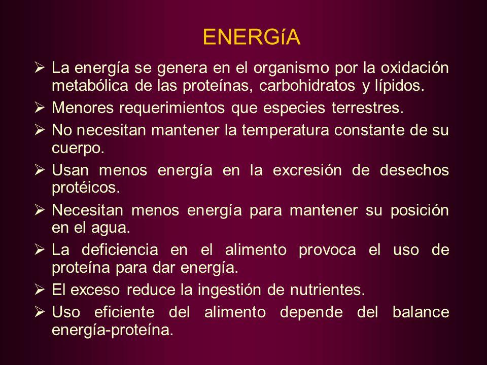 ENERGíA La energía se genera en el organismo por la oxidación metabólica de las proteínas, carbohidratos y lípidos. Menores requerimientos que especie