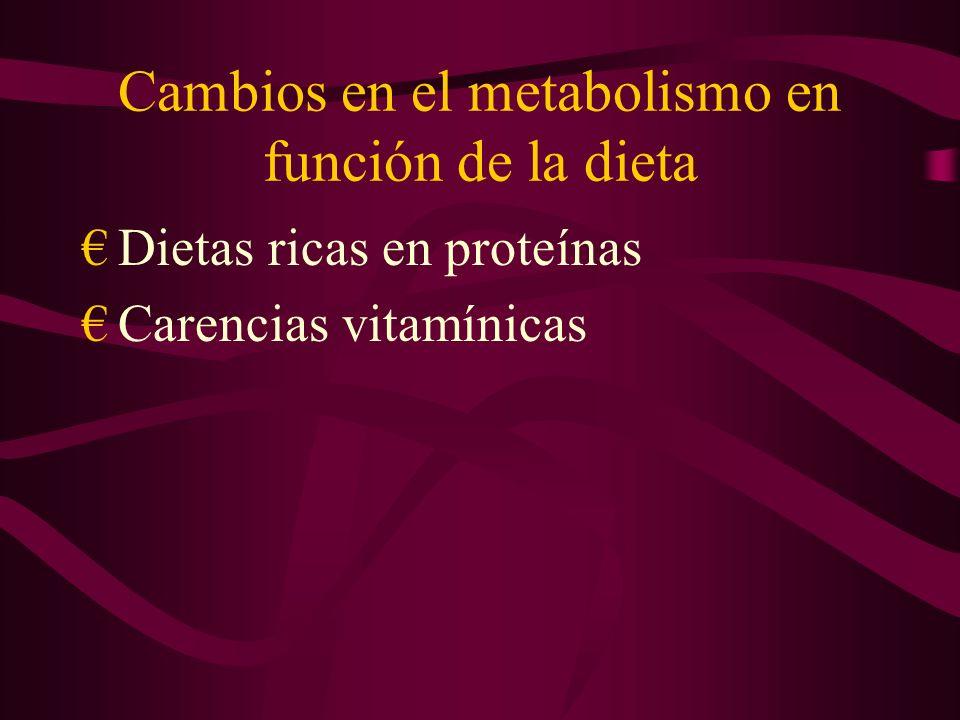 Cambios en el metabolismo en función de la dieta Dietas ricas en proteínas Carencias vitamínicas