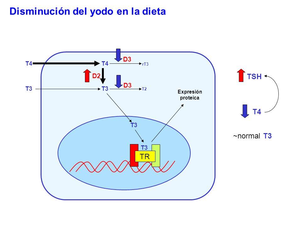 T4 T3 T4 T3 rT3 T2 D2 D3 T3 TR Expresión proteica T4 T3 ~normal TSH Disminución del yodo en la dieta