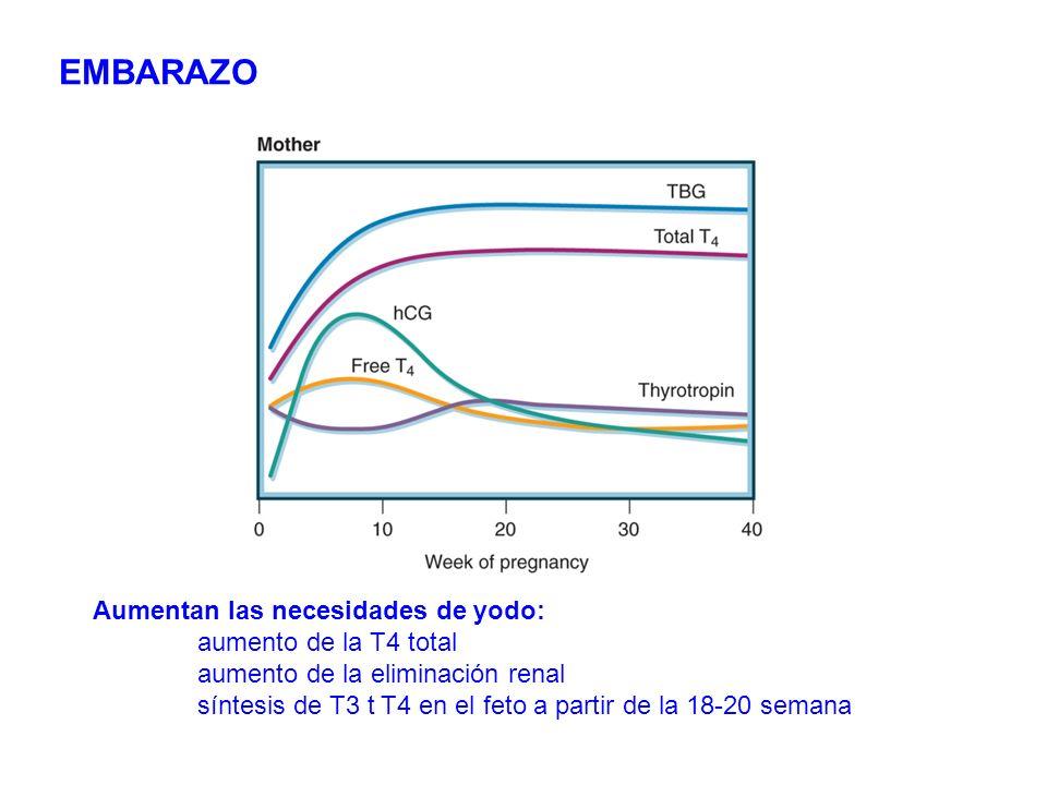 Aumentan las necesidades de yodo: aumento de la T4 total aumento de la eliminación renal síntesis de T3 t T4 en el feto a partir de la 18-20 semana EM