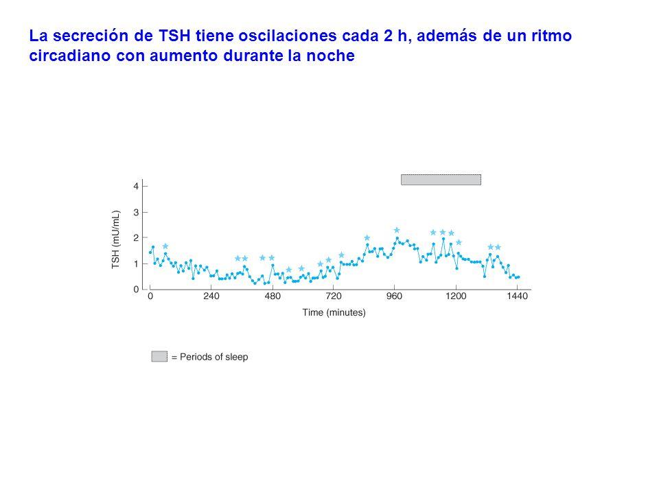 La secreción de TSH tiene oscilaciones cada 2 h, además de un ritmo circadiano con aumento durante la noche