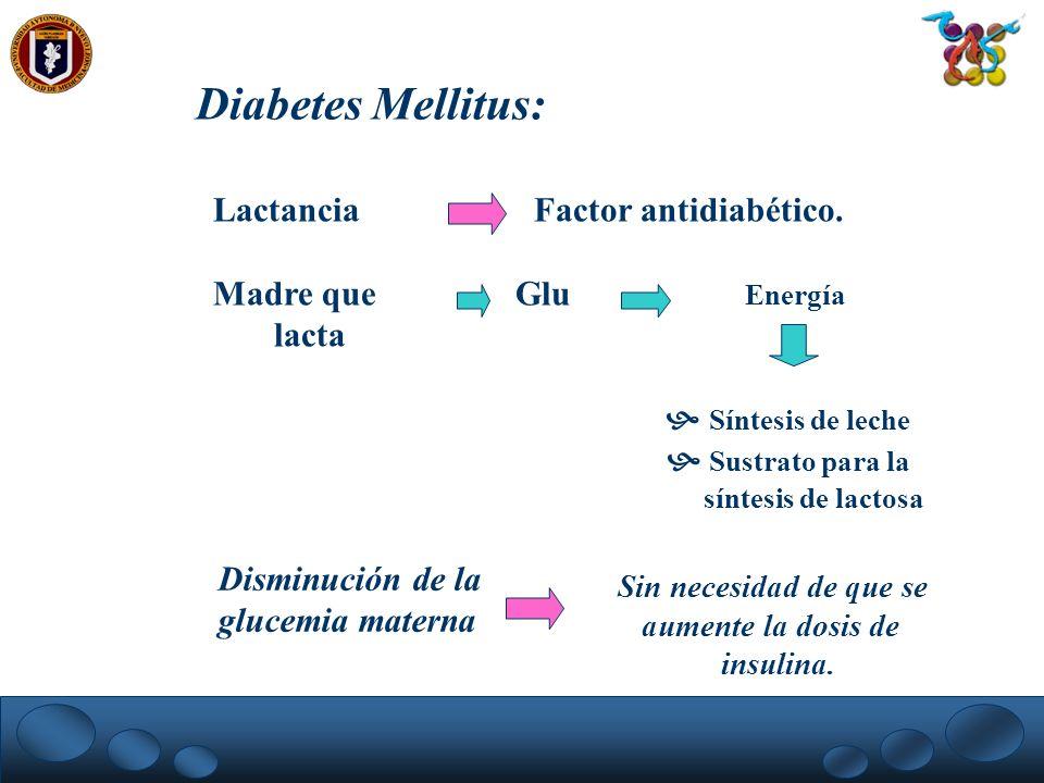 Diabetes Mellitus: Lactancia Factor antidiabético. Madre que Glu Energía lacta Síntesis de leche Sustrato para la síntesis de lactosa Disminución de l